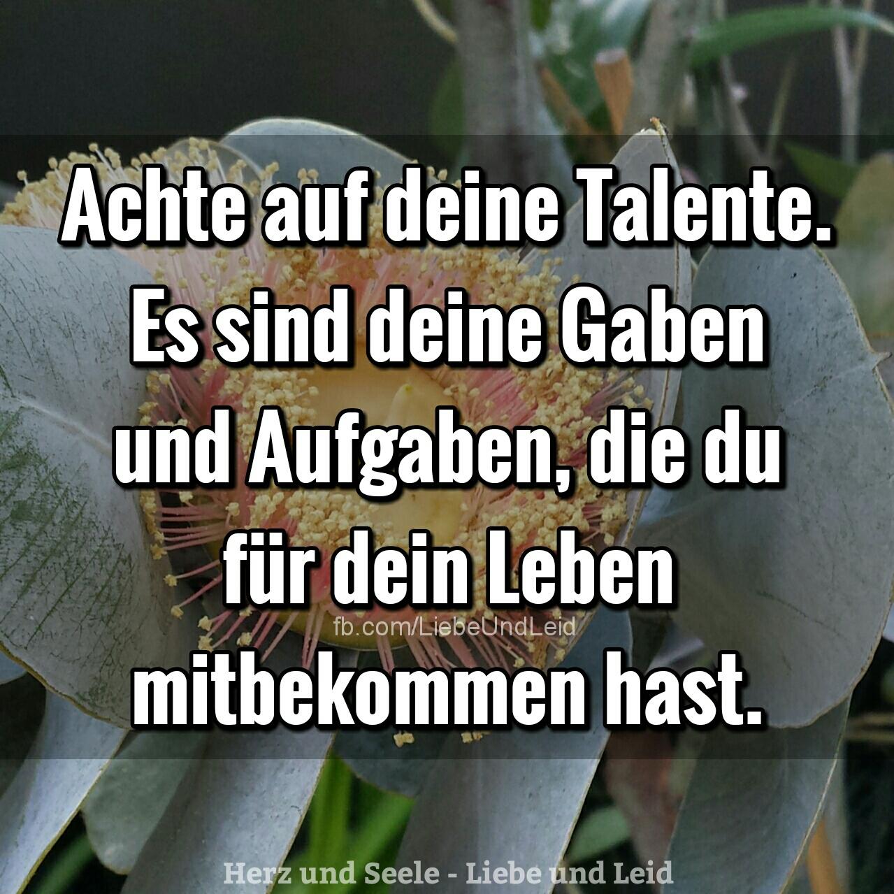 achte.auf.deine.talente.es.sind.deine.gaben.und.aufgaben