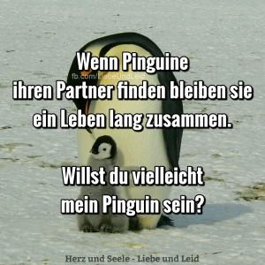 wenn.pinguine.ihren .partner.finden